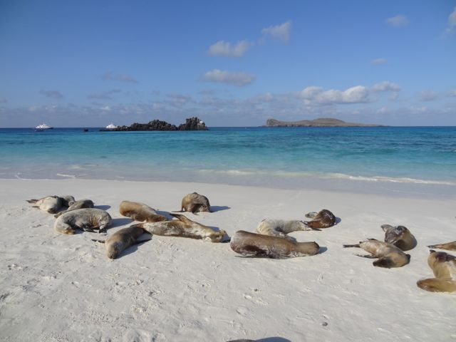 sea lions resting on the beach in Galapagos Islands